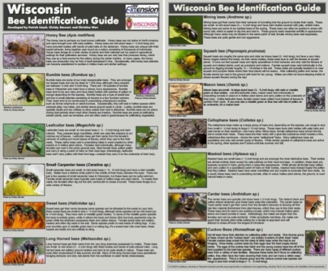 wi-bee-id-guide