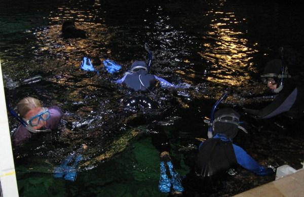 Sea Life Snorkeling