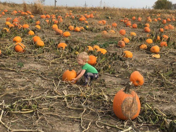 Even Timmy had fun picking the perfect pumpkin.