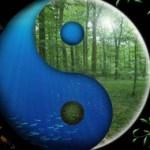 yin-yang-earth-plankton