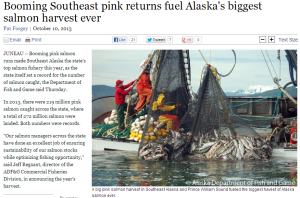 Largest salmon catch in history (click to enlarge)