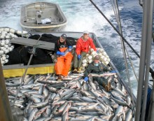 The Fish Came Back From Our Restored Ocean Pasture Producing The Largest Catch Of Salmon In Alaskan History