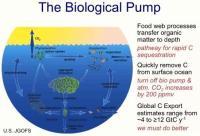 OceanBiologicalPump2