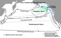 Pacific gyres