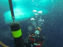 arctic ice diver