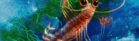 happyfeet krill
