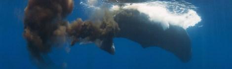 whale poop