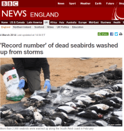 Seabird ocean canaries dying in the UK