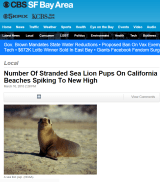 sealion_pup_newsclip1