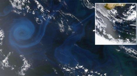 indian ocean pasture collapse