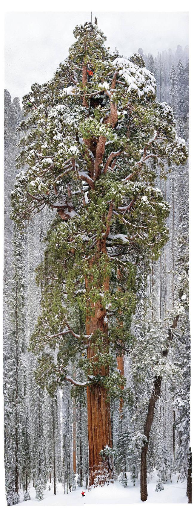 president_sequoia1