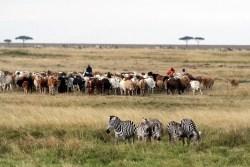 namibia_pasture1