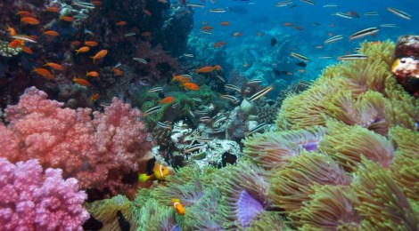 corals can be saved
