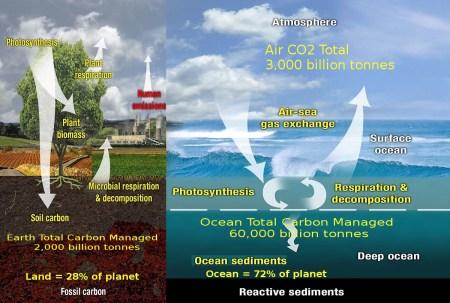 EarthvsOcean_carbon restoring ocean plant life part of green plan
