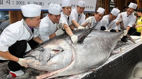 bluefin tuna with chefs