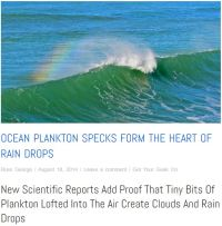 Plankton at the heart of every raindrop