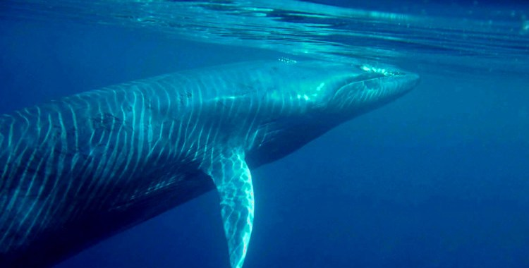 whales share of mother nature