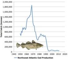 atlantic cod collapse chart