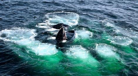 ocean oxygen