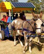 donkey cart pat of green plan