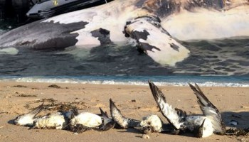 Ocean Death Toll For Five Years - Russ George