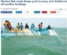 India Sardine collapse