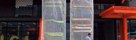 Urban Micro-Algae Pastures Prove Blooming Power Of Mother Nature