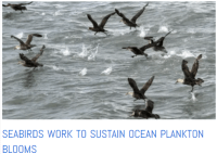seabirds and plankton