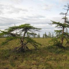 Vegetation in Russian Arctic has memory