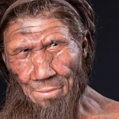 Discovered Evidence Of Neanderthal Cannibalism In Northern Europe