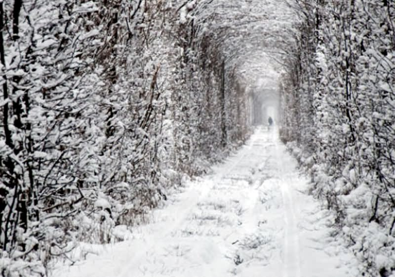the-tunnel-of-love-covered-with-snow-in-winters