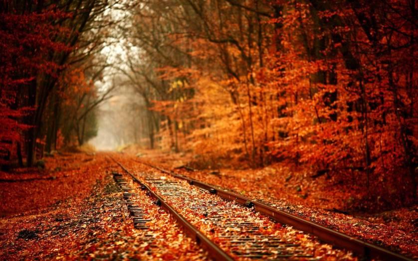 tunne-of-love-fall
