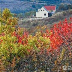 Golden Autumn in Crimea