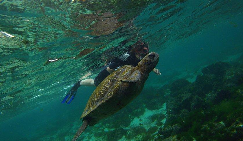 Плавание с морскими черепахами – одно из самых любимых развлечений туристов на острове Сан-Кристобаль.