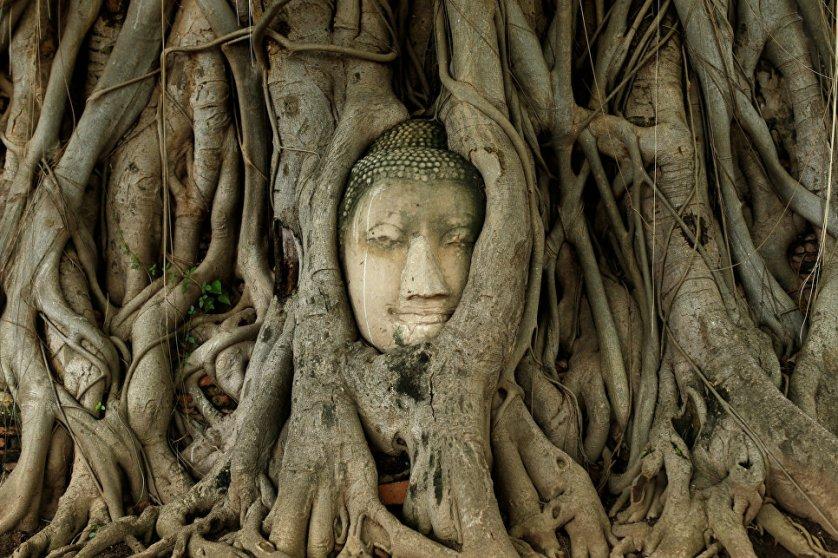 Голова Будды в корнях дерева в городе Аюттая. Таиланд, 2016