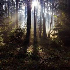 Сергей Иванов призвал навести порядок в лесной сфере