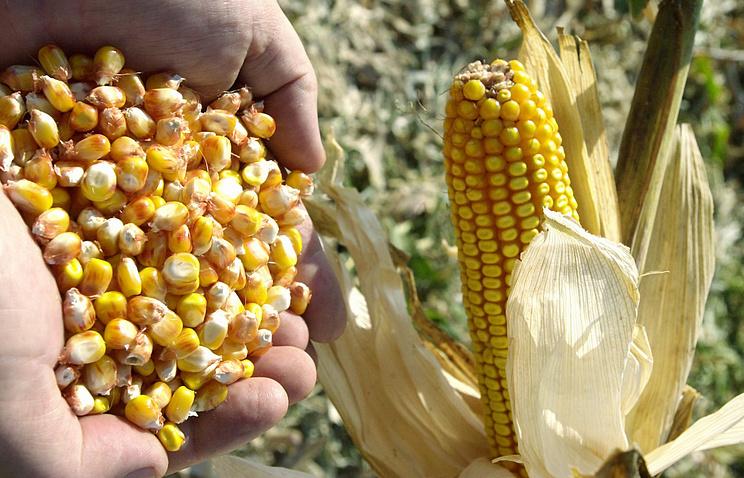 «Известия»: Турция назвала размеры пошлин на российскую сельхозпродукцию