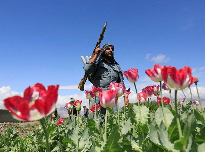 Афганский полицейский участвует в антинаркотической операции в провинции Джалалабад.