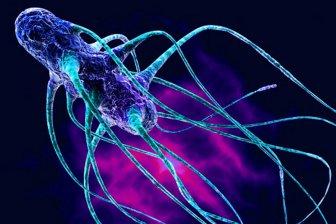 Ученые создали «супероружие» для борьбы с «супербактериями»