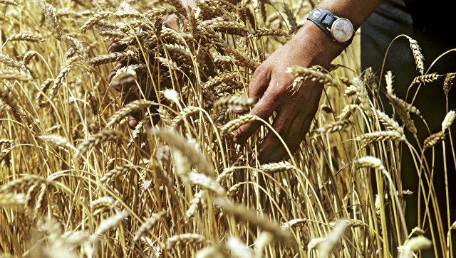 В Минэкономразвития прокомментировали ограничения поставок зерна в Турцию