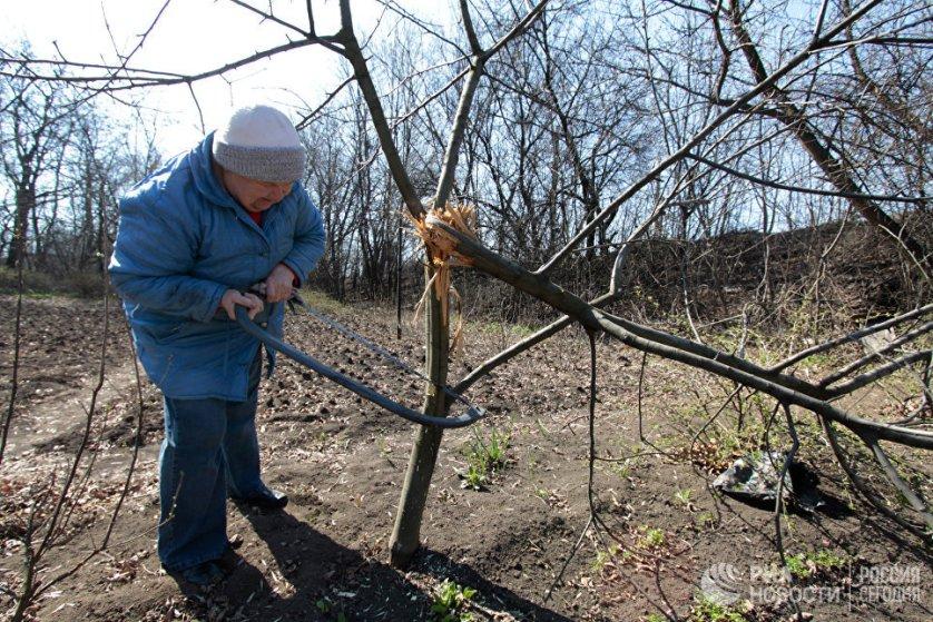 Местная жительница отпиливает ветки, поврежденные осколками снарядов.
