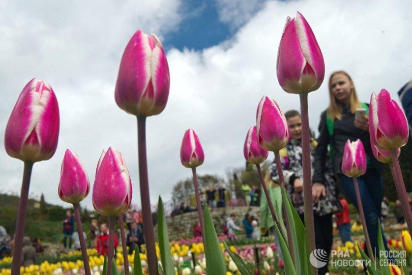 При этом 70 сортов тюльпанов на параде этого года экспонируются в ботаническом саду впервые.