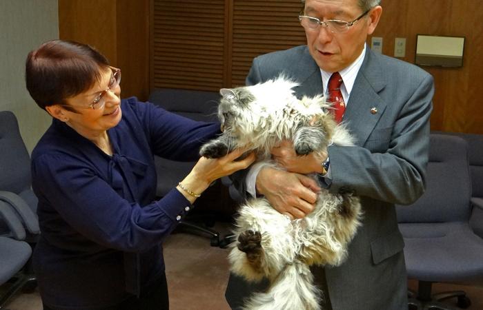 Японский губернатор рассказал об отношениях с подаренным Путиным котом