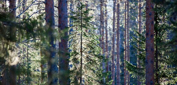 Скитавшийся по лесу под Курском мальчик выжил, питаясь травой и листьями