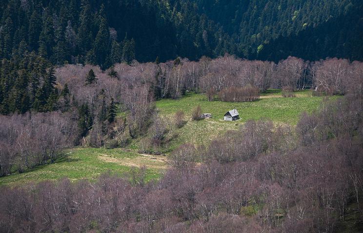 Минприроды составило рейтинг регионов РФ по эффективности использования лесных ресурсов