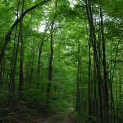 Иванов предложил дополнить законопроект о лесной амнистии пунктом о восстановлении леса