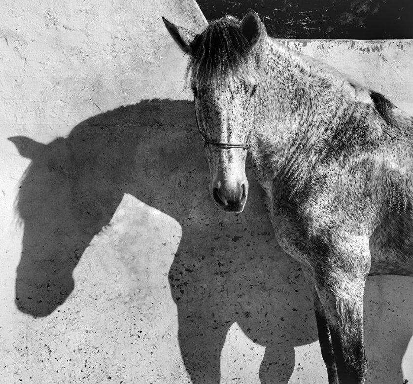 """Работа фотографа из Италии Франчески Тонегутти, занявшая 1-ое место в категории """"Животные""""."""