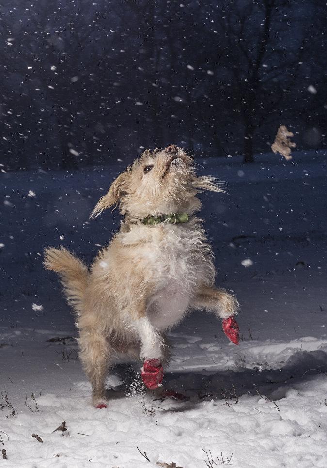 """Победитель конкурса в категории """"Я люблю собак за.."""" фотограф из США Джулиан Готфрид. Снимок """"Прыгая от радости""""."""