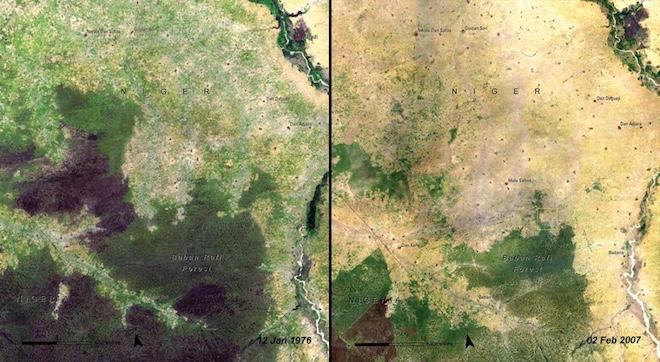 И то же самое случилось с лесом Бабан-Рафи в Нигере с 1976 до 2007 годы. © NASA