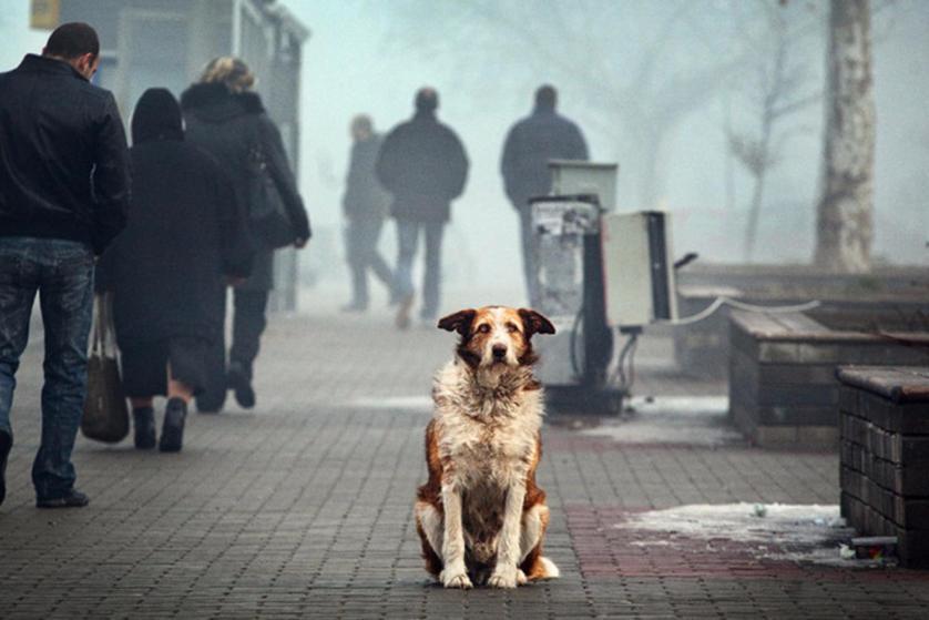 В Кремле следят за ходом работы над законопроектом о защите животных